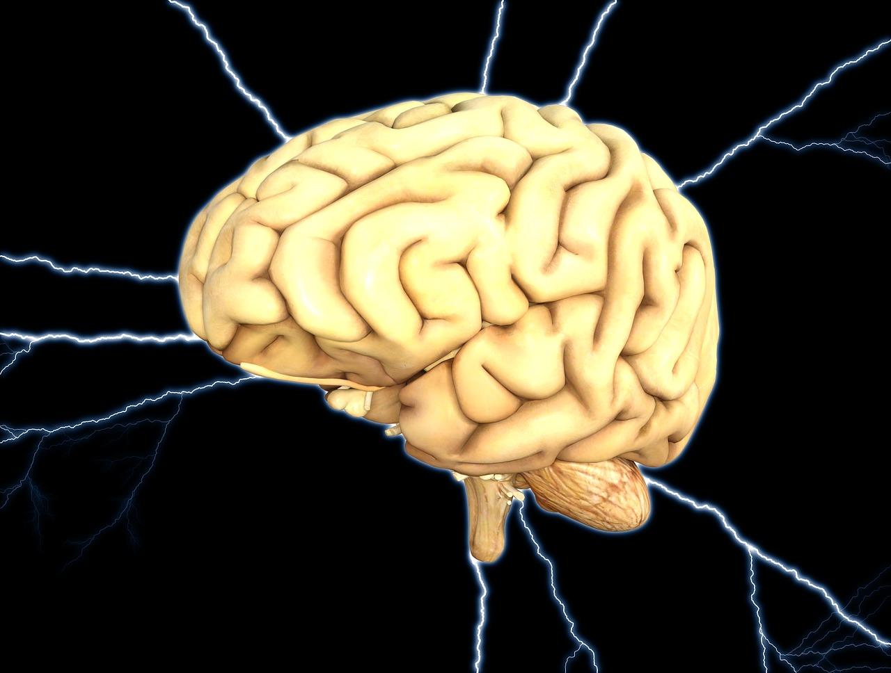 Was ist eigentlich das Gehirn